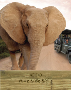 Addo - Home to the Big 7